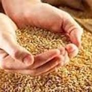 Фумизация, газация, защита зерна и зернопродуктов фото
