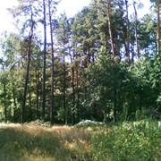 Земельные участки г. Житомир и область фото