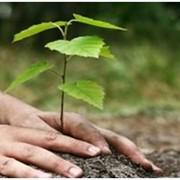 Экологический менеджмент фото