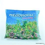 Медоносы смесь семян: фацелия, донник, эспарцет, козлятник 0,5 кг фото