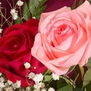 Специальный курс «Современный розарий» фото