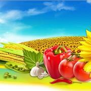 Агрономический надзор над полями фото