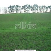 Подготовка документов для продажи земельных участков фото