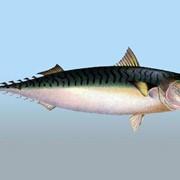Рыба свежемороженная фото