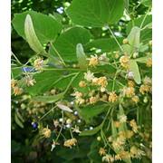 Лекарственные травы Selling medicinal herbs, dried) фото