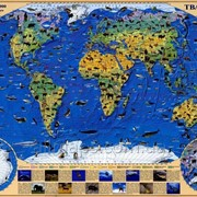 Карта животных мира 65х45 см - ламинированная фото
