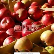 Закупка и заготовка яблок фото