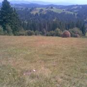 Земля для VIP отдыха Карпаты, Яремча фото
