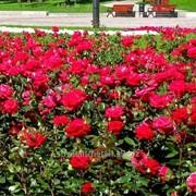 Устройство цветников и клумб №10 фото