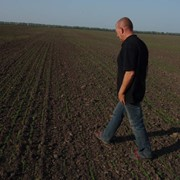 Агрономическое сопровождение выращивания льна. Биологическая защита растений. фото