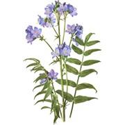 Синюхи голубой корни, 25 г фото