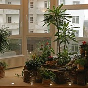 Сады зимние фото
