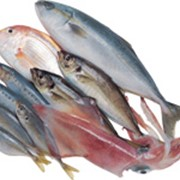 Оптовая продажа рыбы и морепродуктов по Украине фото