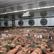 Вентиляционное и холодильное оборудование для длительного хранения овощей и картофеля. фото