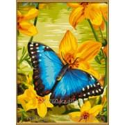 Картинки по номерам Голубая бабочка фото