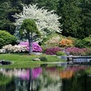 Ландшафтное проектирование сада с учетом геопатогенных зон фото