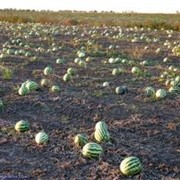 Продажа обустроенного фермерского хозяйства фото