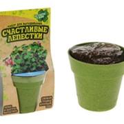 Растущая трава Горшочек с зеленью фото
