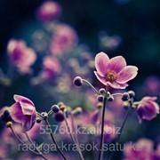Картина по номерам Нежные цветы фото