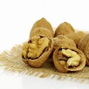 Орехи Орехи грецкие фото