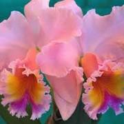 Доставка цветов, цветочных букетов, корзины фруктов, букетов из конфет, доставка по Львову вазонов фото