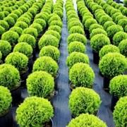 Озеленение территорий Киев фото
