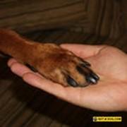 Скорая ветеринарная помощь фото