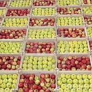 Продам яблоки свежие фото