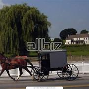 Прокат, аренда конных экипажей для свадьбы фото