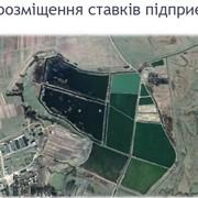 Продажа завода по выращиванию рыбы. фото