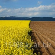 Земельный участок сельхозназначения от 100 до 1000 га фото