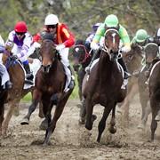 Международные соревнования по всем видам конного спорта в РК. фото