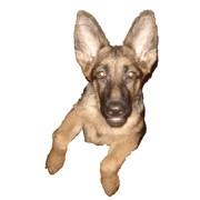 Лечение собак фото