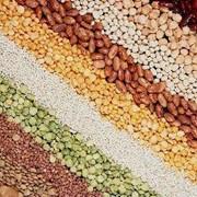 Закуп: сахара, соли, крупы , муки , макарон, рис горох пшено гречневую фото