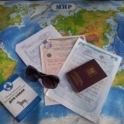 Оформление документов для вывоза собак и кошек в страны ЕС фото