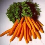 Морковь урожай 2016 года фото