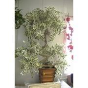 Дерево искусственное Фикус белый фото