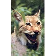 Охота Березинский биосферный заповедник фото