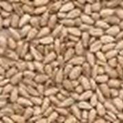 Семена подсолнечника в ассортименте: Лакомка та Донской (крупноплодный) фото