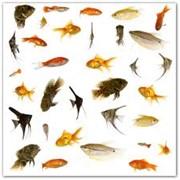 Рыбы аквариумные фото