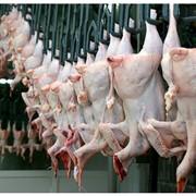 Мясо цыплят бройлеров фото