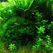 Заказать аквариум с оформлением фото