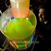 Добавление хлореллы повышает биомассу фото