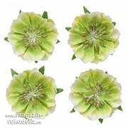 Цветы анемоны, набор 4 шт, светло-зеленые фото