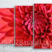 Модульна картина на полотні Червона жоржина код КМ100130-079 фото