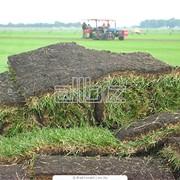 Газоны рулонные, травяные покрытия фото