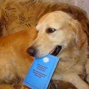 Регистрация животных с выдачей ветеринарного документа фото