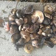 Маслята солёные грибы фото