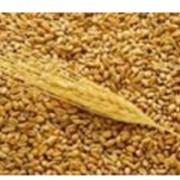 Развитие экспорта зерна фото