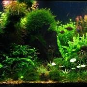 Оформление и установка аквариума фото